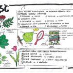 Paprotniki – klasa 5 – kolorowa sketchnotka