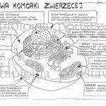 Klasa 5 – Budowa komórki roślinnej, bakteryjnej, grzybowej – prezentacja