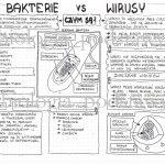 Klasa 5 – Wirusy i bakterie – sketchnotka