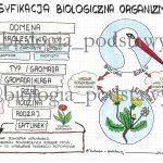 Klasa 5 – Klasyfikacja organizmów – sketchnotka
