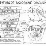 Klasa 5 – Klasyfikacja organizmów – prezentacja