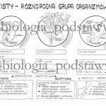 Klasa 5 – Protisty – karta pracy