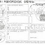 Klasa 5 – Grzyby i Porosty – sketchnotka