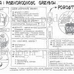 Klasa 5 – Grzyby i Porosty – budowa – sketchnotka