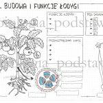 Klasa 5 – pęd. Budowa i funkcje łodygi – sketchnotka do pokolorowania