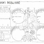 Klasa 5 – Tkanki roślinne – sketchnotka