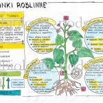 Klasa 5 – Tkanki roślinne – kp