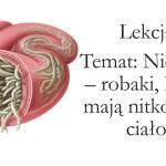 Klasa 6 – Tkanki: nabłonkowa, mięśniowa, nerwowa – KP