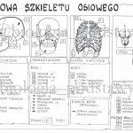 Klasa 7 – Budowa szkieletu – sketchnotka