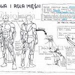 Klasa 7 – Budowa i rola mięśni – KP