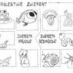 Klasa 6 – W królestwie zwierząt – sketchnotka