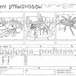 Klasa 6 – Skorupiaki – sketchnotka