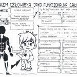 Klasa 7 – Organizm człowieka jako funkcjonalna całość – karta pracy