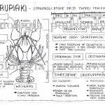 klasa 6 – cechy stawonogów – karta pracy